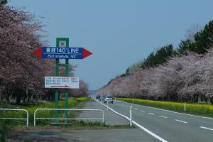 桜と菜の花ロード経緯度交会点看板